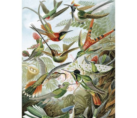 KEK Amsterdam Panneau de papier peint Exotic Birds papier peint intissé multicolore 142,5x180cm