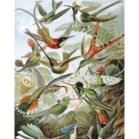 KEK Amsterdam Wallpaper Panel Exotic Birds multicolour non-woven wallpaper 142,5x180cm
