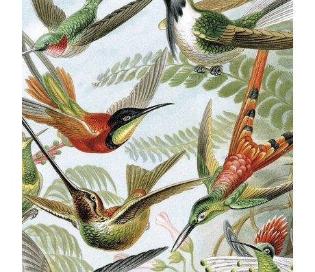 KEK Amsterdam Panneau de papier peint Oiseaux exotiques Papier peint intissé multicolore 142,5x180cm