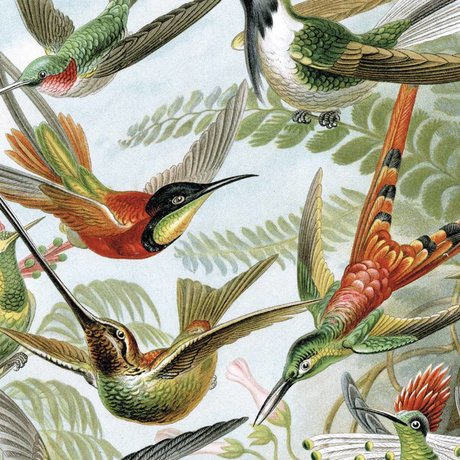 KEK Amsterdam Wallpaper Panel Exotic Birds multicolour non-woven wallpaper 142,5x180cm