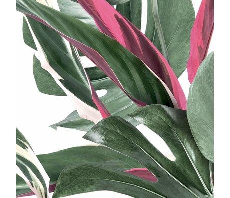 KEK Amsterdam Papier peint Feuilles botaniques papier peint intissé blanc non tissé 97,4x280cm (2 feuilles)