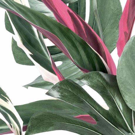 KEK Amsterdam Tapete Botanical leaves weiß Vliestapete 97,4x280cm (2 Blatt)