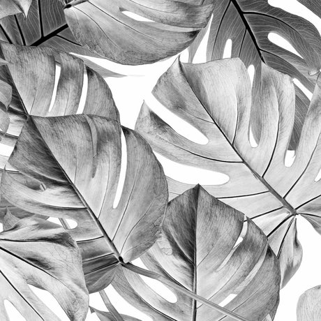 KEK Amsterdam Behang Monstera zwart wit vliesbehang 97,4x280cm (2 sheets)