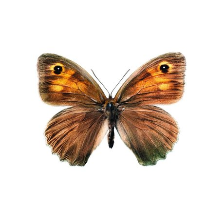 KEK Amsterdam Wall Sticker Butterfly Butterfly 952 brown 17x12cm