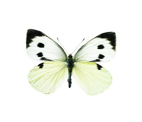 KEK Amsterdam Wall Sticker Butterfly Butterfly 956 white brown gray 17x12cm