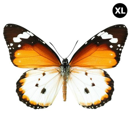 KEK Amsterdam Wall Sticker Butterfly Butterfly XL 962 brown white 34x23cm