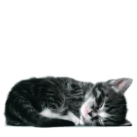 KEK Amsterdam Wall Sticker gray kitten Sam 18x7cm