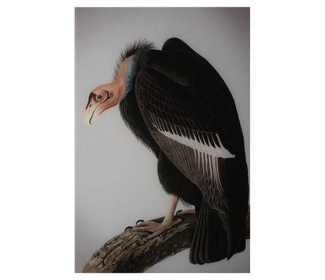 wonenmetlef Schilderij Vulture multicolour plexiglas 100x150cm