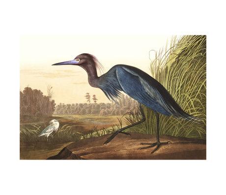 wonenmetlef Schilderij Blue Crane multicolour plexiglas 60x90cm