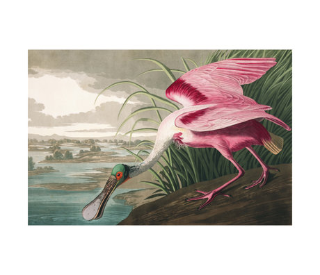 wonenmetlef Schilderij Spoonbill multicolour plexiglas 60x90cm