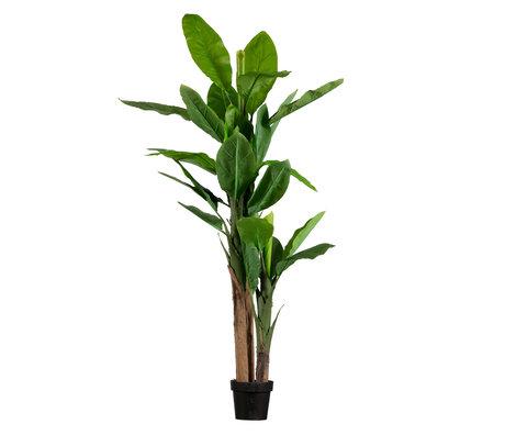 LEF collections Kunstplant Bananenplant groen kunststof 95x80x195cm