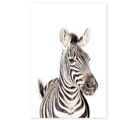 Groovy Magnets Magnetaufkleber Zebra selbstklebendes Vinyl mit Eisenpartikeln 60x90cm