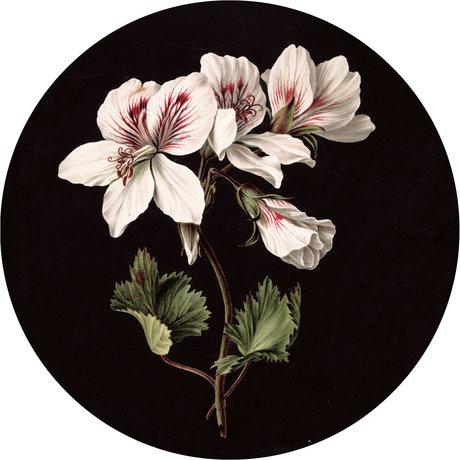 KEK Amsterdam Papier peint cercle Papier peint intissé multicolore Fleurs blanches Ø190cm