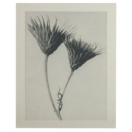 BePureHome Kunstprint Artwork Plantstudie 102 Grijs Beige 50x2x70cm