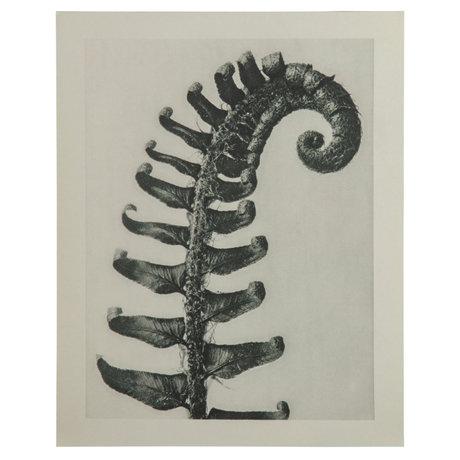 BePureHome Kunstprint Artwork Plantstudie 38 Grijs Beige 50x2x70cm