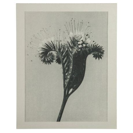 BePureHome Kunstprint Artwork Plantstudie 98 Grijs Beige 50x2x70cm