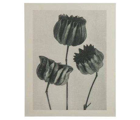 BePureHome Kunstprint Artwork Plantstudie 103 Grijs Beige 50x2x70cm