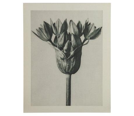 BePureHome Kunstprint Artwork Plantstudie 94 Grijs Beige 50x2x70cm