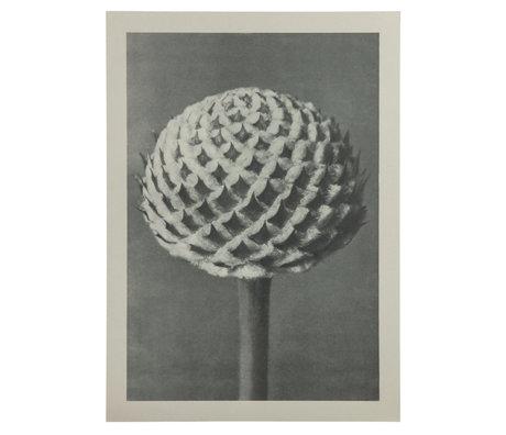 BePureHome Kunstprint Artwork Plantstudie 77 Grijs Beige 50x2x70cm