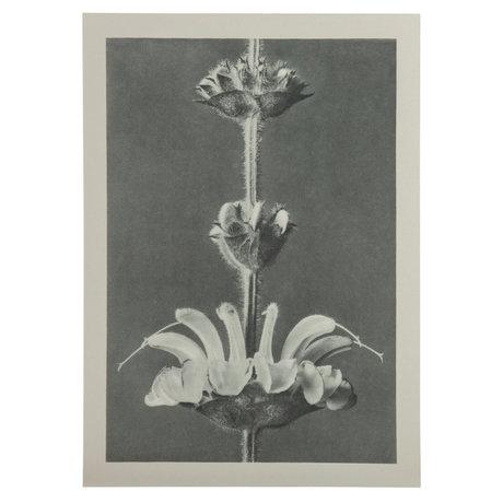 BePureHome Kunstprint Artwork Plantstudie 61 Grijs Beige 50x2x70cm