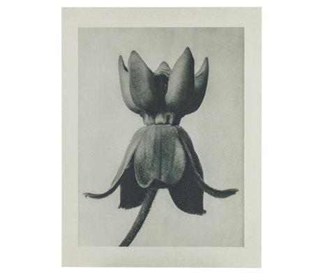 BePureHome Kunstprint Artwork Plantstudie 81 Grijs Beige Honingaatkarton 100x2x130cm