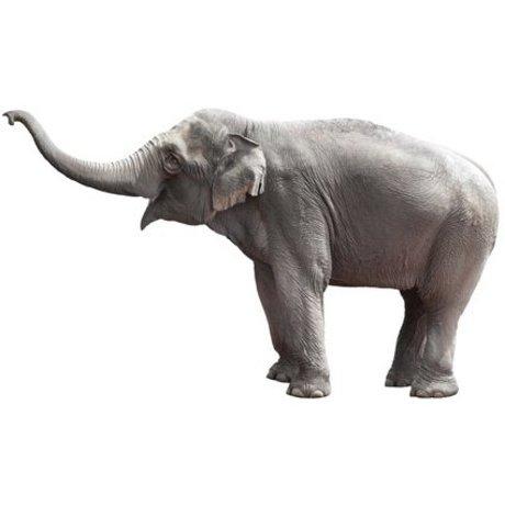 KEK Amsterdam Wandtattoo Elefanten grau Vinyl 58x100cm, Safari Freunde Elephant