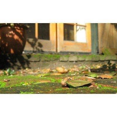 Greenex nettoyant pour dépôts et moisissures - 5 l  (BE: BE-REG-00152, NL: 14485N, FR: 42594, LUX: 137/15/L)
