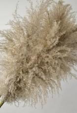 Fluffy Pampas gras 90-110cm