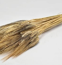 Tarwe Black Beard 250gr 75cm