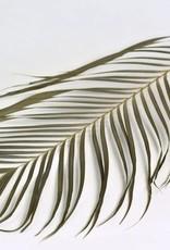 Areca Palmbladeren 100cm