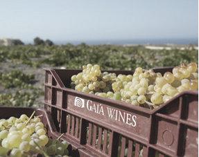 Onze wijnen