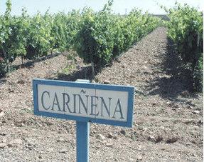Carinena
