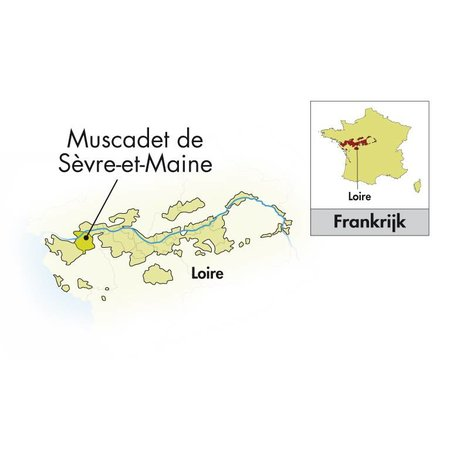 2017 Domaine de la Grange Muscadet Sèvre und Maine sur Lüge