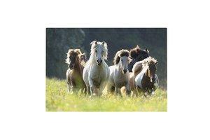 Lannoo My Favourite Friends - Bureauonderlegger 3D (60x40cm) (paard)