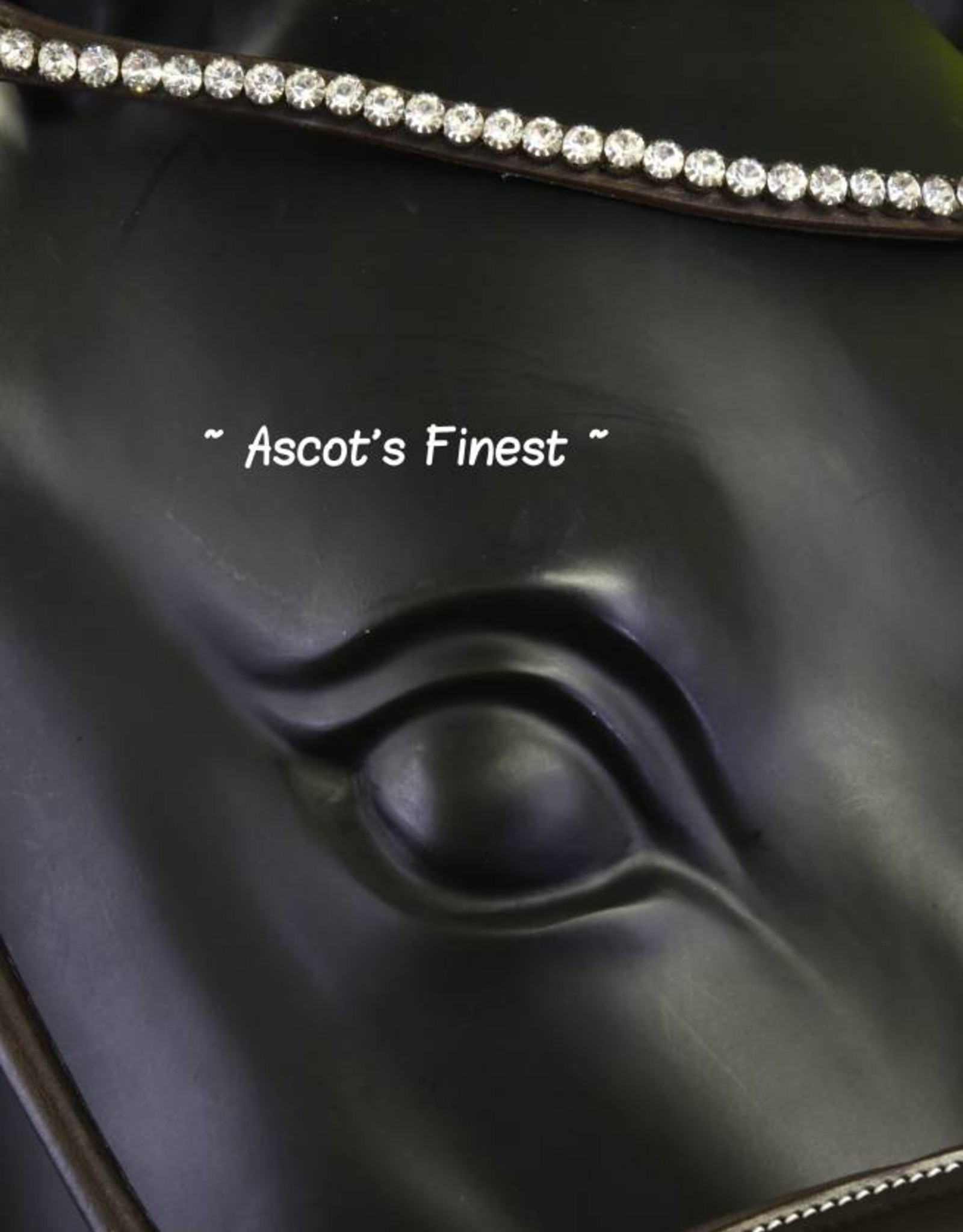 Ascot's Finest Havanna bruin rondgenaaid - Cob