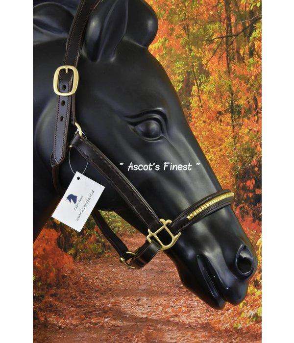 Ascot's Finest Bruin rundleer met goudkleurige studs - Full