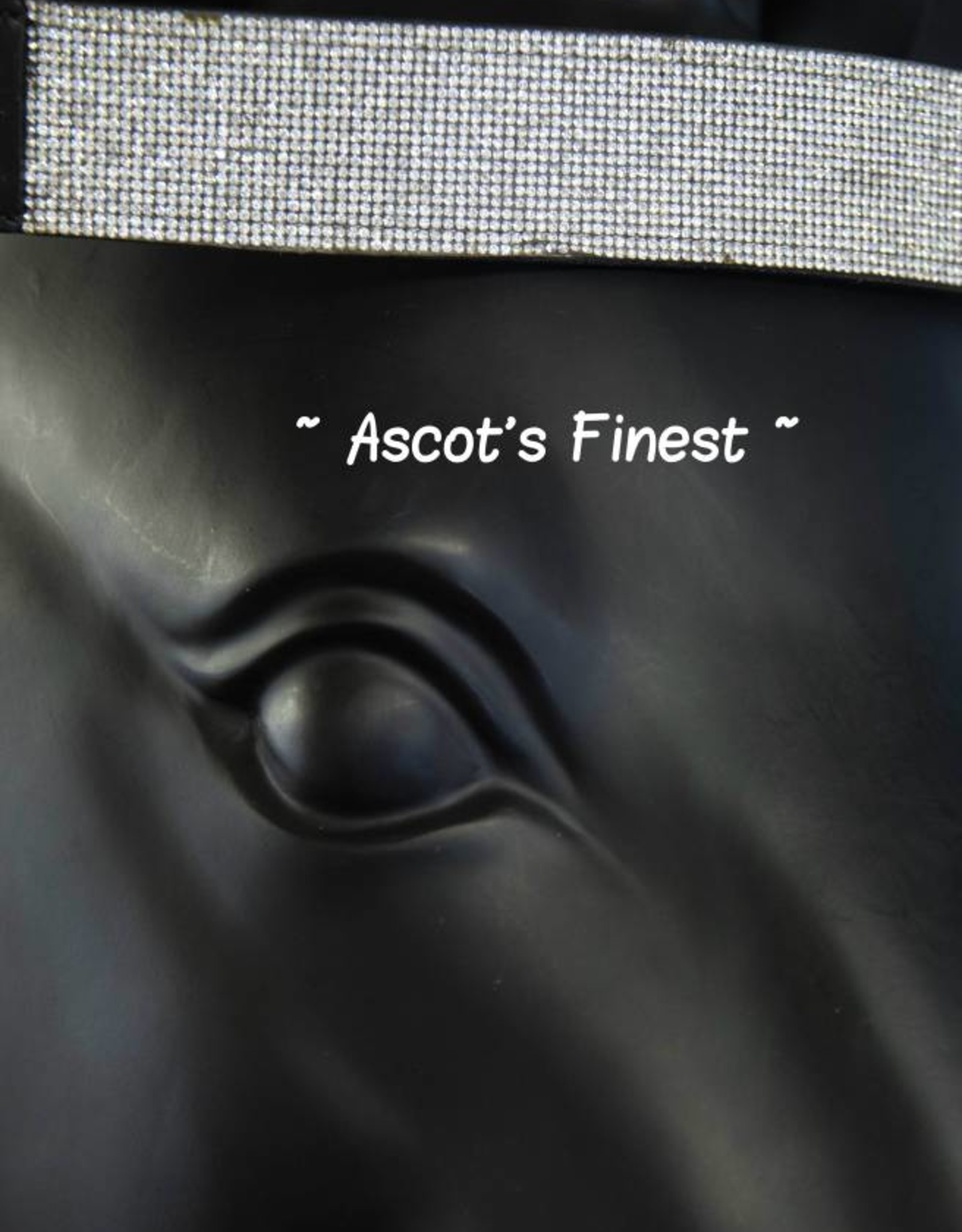 Ascot's Finest Frontriem - Zilver