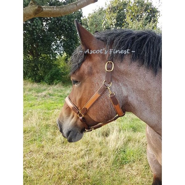 Brown cowhide leather bridle - Cob, Full, XFull and Draught Horse