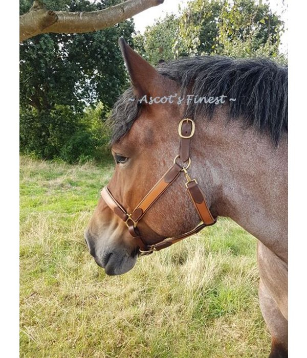 Ascot's Finest Brown cowhide leather bridle - Cob, Full, XFull and Draught Horse