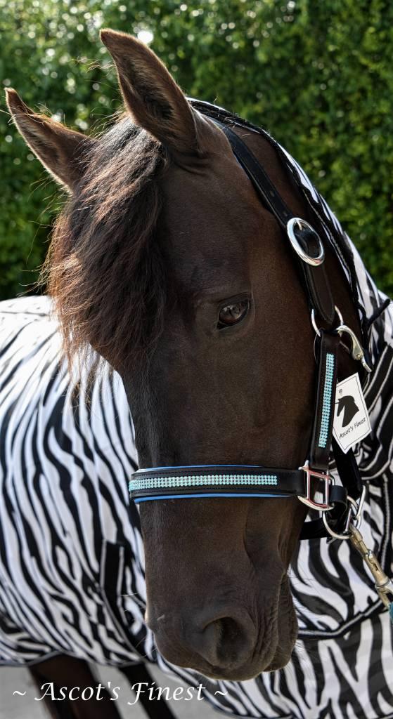 Ascot's Finest Zwart lederen halster met blauwe padding en strass - Pony, Cob en Full