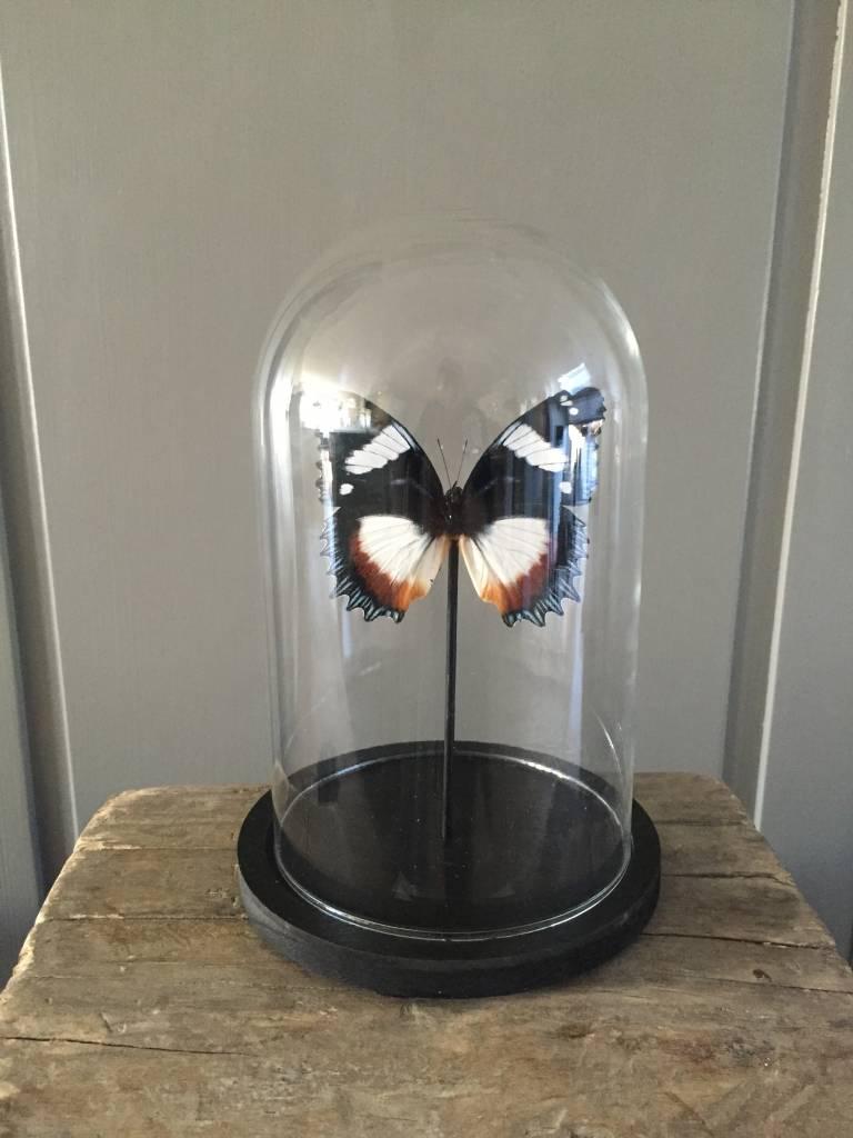 Vlinders in stolp