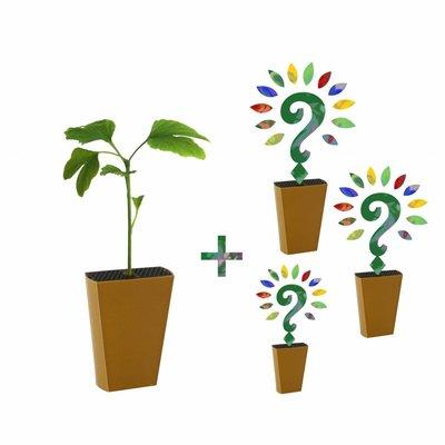Jaarabonnement 4 Seizoenen: Ginkgo + drie nieuwe soorten