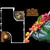 Koffieplant (Coffea arabica)