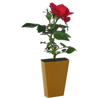 Roosje Rood