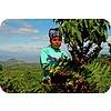 Jaarabonnement 4 Seizoenen: Koffie + drie nieuwe soorten