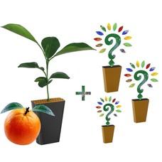 Jaarabonnement 4 Seizoenen: Sinaasappelboompje + drie nieuwe soorten