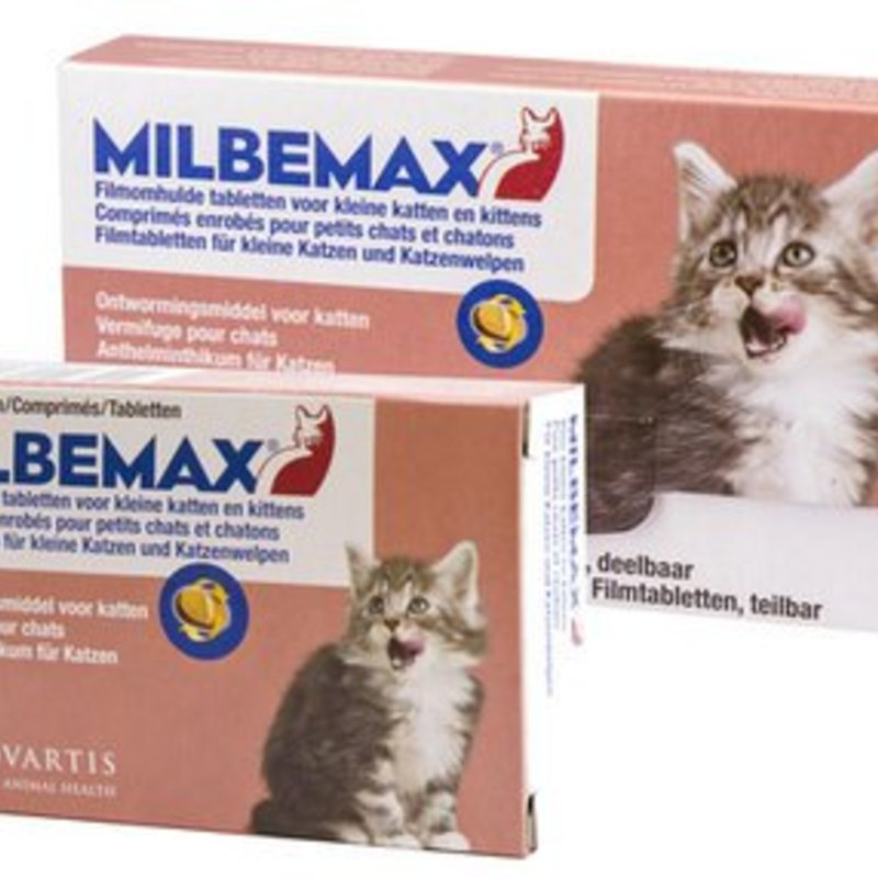 Milbemax kitten