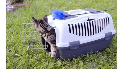 Kattenreismanden