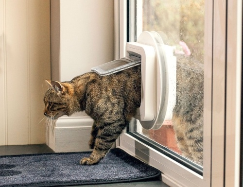 Vreemde kat in huis