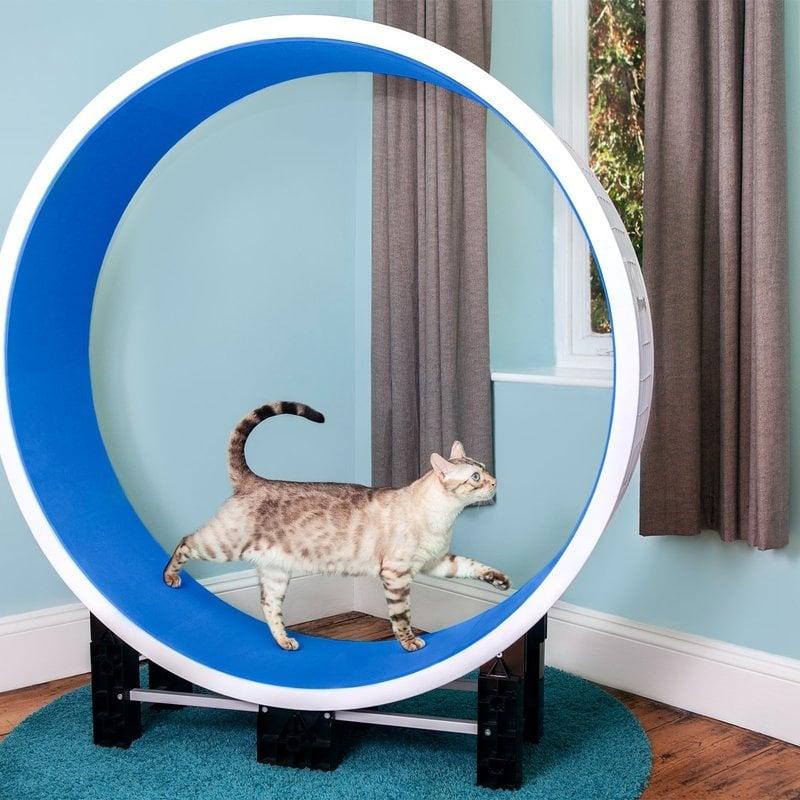 Ferris Ferris Cat Wheel